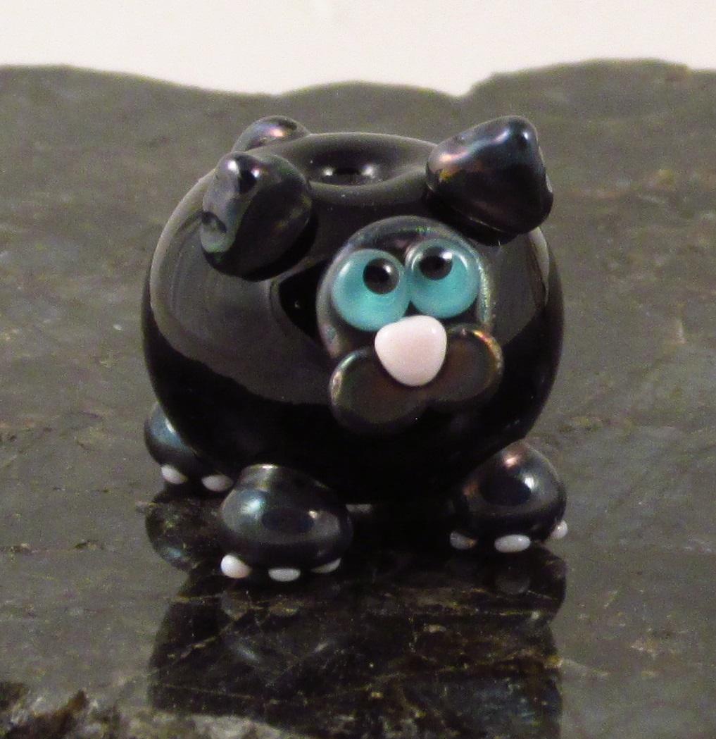 Metallic Black Siamese Cat